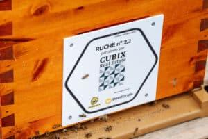 Cubix - Beebonds